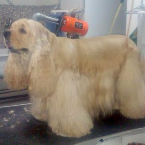 Perros de raza corte de pelo en Estepona