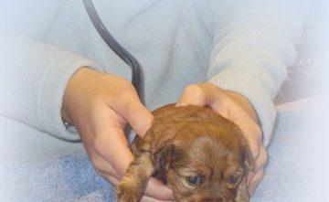 Servicio veterinario en Estepona
