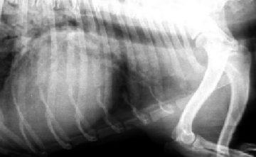 Radiografía digital para animales de compañía Estepona